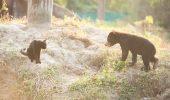 O prietenie care NU tine cont de specii…o pisica si un pui de urs, tovarasi de joaca!