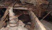 "Animalele scapate din ""garsoniera groazei"", din Brasov, sunt sub tratament de urgenta"
