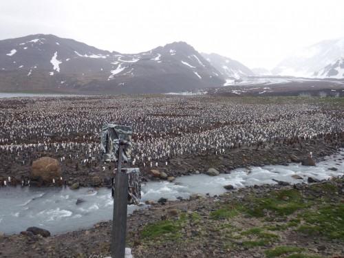 camera pinguini