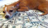 Top 9 al celor mai bogate animale din lume