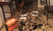 In numai trei ore, un Husky a …redecorat…toata casa stapanilor!!