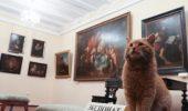 Pisica Maray, paznicul Muzeului Serpukhov, din Rusia!