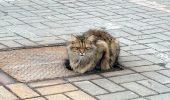 EMOTIE: O pisica s-a intors, timp de un an de zile, in locul in care a fost abandonata, sperand ca stapanii se vor intoarce dupa ea…
