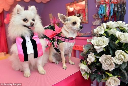 """Nunta mare: o britanica scoate din buzunar peste 20.000 de lire sterline, pentru """"nunta"""" catelusei sale"""