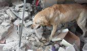 Eroul Dayko, cainele care a murit de epuizare dupa ce a salvat sapte persoane dupa cutremurul din Ecuador