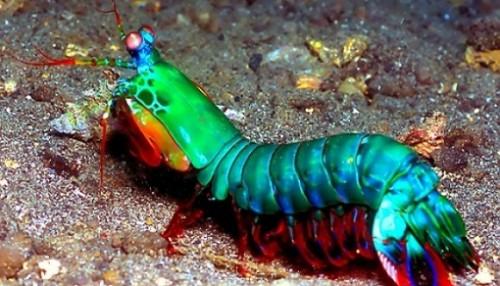 sursa foto: aquapedia.ro