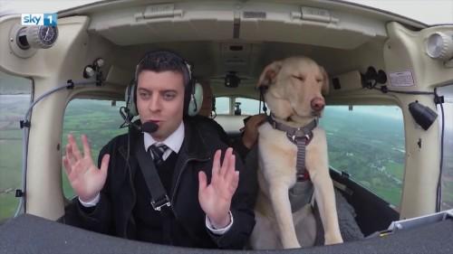 Un dresor a invatat trei caini sa piloteze avionul