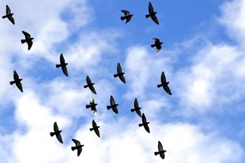 Ziua internationala a pasarilor