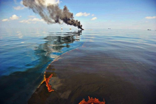 Mareea neagra produsa de British Petroleum, in Mexic, a omoarat puii de delfin