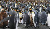 Si tu poti participa la numararea pinguinilor