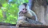 Este ADORABILĂ! Maimutica furand un sarut PASIONAL de la o PISICĂ… video