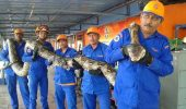 Un piton gigant a fost descoperit pe un santier, in Malaezia