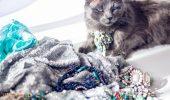 """Pitzush este o pisica din Cluj, care ironizeaza """"pitipoancele"""""""