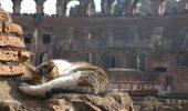 Pisicile salveaza…Roma!