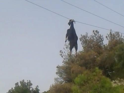 Un tap a ramas suspendat de un cablu, la 4 metri de pamant!