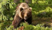 """""""Ursul, simbol al salbaticiei"""""""