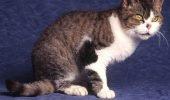 sursa foto: www.catbreedselector.com