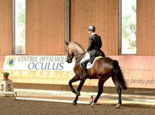 Dresaj ecvestru_Clubul Equestria (1)