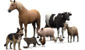 Declaratia Universala a Drepturilor Animalelor