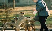 Proiect de lege: amenda de 5.000 lei celor care hranesc cainii vagabonzi, pe domeniul public
