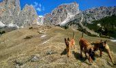 Cainii de salvare montana din Romania, apreciati peste hotare, neinteresanti pentru autoritatile noastre