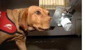 UIMITOR: Cand vine vorba de a mirosi cancerul, cainii sunt cu adevarat…doctorii cei mai priceputi!