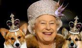 Regina Elisabeta a II-a si iubitii sai caini Corgi
