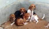 sursa foto: www.dailymail.co.uk