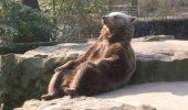 Un urs relaxat a devenit viral printre utilizatorii Reddit. Imaginile ursului Zen fac inconjurul Internetului