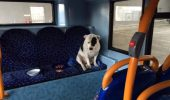 Atat de inspaimantat, dupa ce a fost abandonat intr-un autobuz!