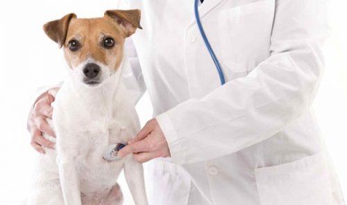 """""""Multi ani sanatosi!"""", medicilor veterinari"""