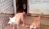 Petitie pentru premier, pentru salvarea animalelor fara stapan…