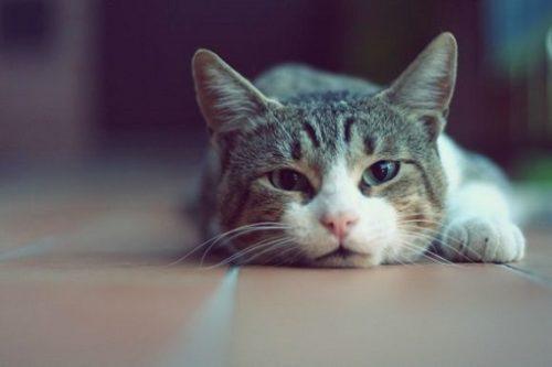 Pisica ta se poate otravi cu ce nici nu te astepti, de prin casa….