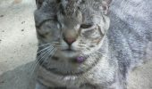 Despre pisicutele cu probleme speciale: amputare, orbire, surzire