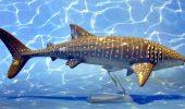 Rechin - balena. sursa foto: animaltoyforum.com