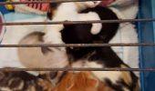 O impresionanta poveste a unei pisici luptatoare….