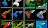 sursa foto: http://fish-etc.com