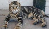 sursa foto: www.catsofaustralia.com
