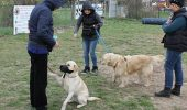 Pregatirea cainelui de Terapie Asistata de Animale (II)