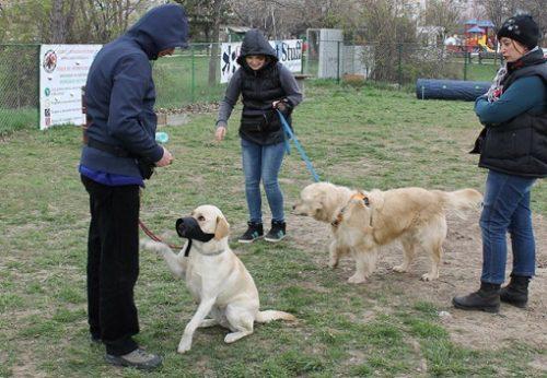 Pregatire caine TAA sursa foto: www.terapiecuanimale.ro