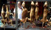 Petitia pentru oprirea Festivalului carnii de caine a strans aproape 3 milioane de semnaturi