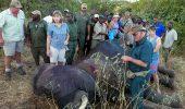 Un elefant impuscat a cerut ajutorul oamenilor