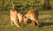 Top 5 animale sacrificate pentru trofee sau ucise de braconieri