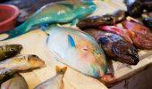 Zeci de specii de pesti au disparut in urma pescuitului excesiv in Filipine