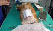 sursa foto: www.cabinet-veterinar-ploiesti.ro