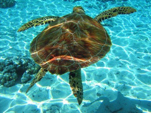 testoasa marina