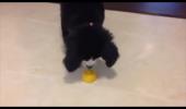 Câinele și lămâia. Reacția haioasă a unui cățeluș|VIDEO