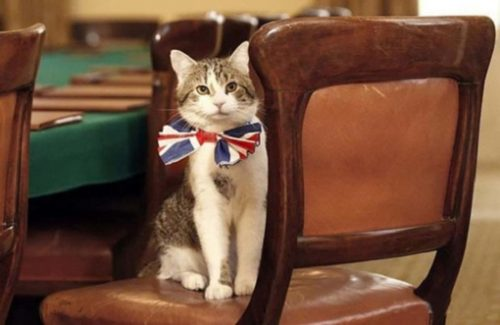 Chief Mouser to the Cabinet Office'1