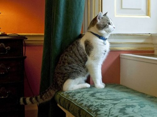 Chief Mouser to the Cabinet Office'3