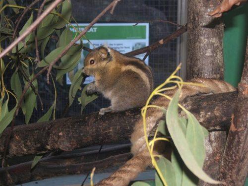 sursa foto: www.zoochat.com